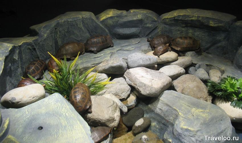 Черепашки в террариуме океанариума на Винперле